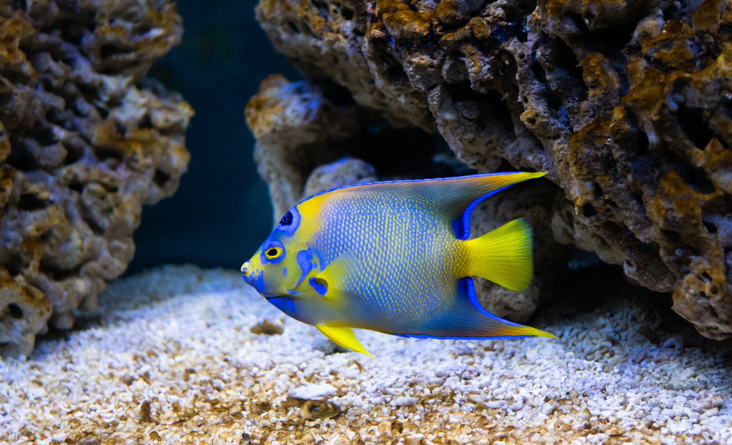 Aquariumwinkel Arnhem